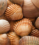 Clam shells. Close up of a group of clam shells Stock Photos