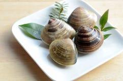 Clam shells Royalty Free Stock Photo