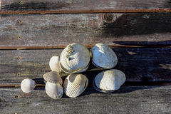Clam Shells på en träfarstubro arkivbilder