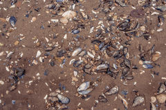 Clam shells in the sand Royalty Free Stock Photos