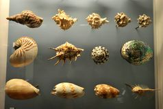 Shells on display at the Horniman Museum in London, England