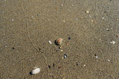 Clam in wet sand Royalty Free Stock Photography