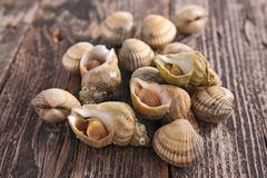 Clam and whelk Royalty Free Stock Image