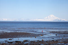 A Clammer's Paradise. Two clammers stand waiting for low tide beneath a large mountain Royalty Free Stock Photography