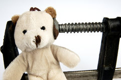 Clamp on the head teddy bear toy. Stock Photo