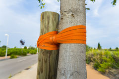 Clamping tree. Royalty Free Stock Photography