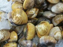 Clams на продовольственном рынке Стоковая Фотография