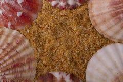 Clams песка в красном цвете Стоковое Изображение RF