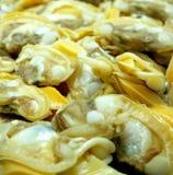 clams свежие Стоковые Фото