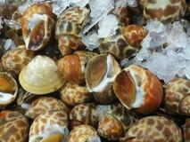 clams свежие Стоковые Изображения RF