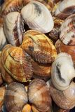 Clams #1 Royalty Free Stock Photography