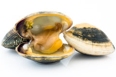 Clams Royalty Free Stock Image