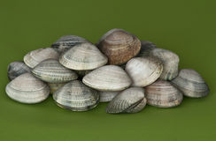 Clams Stock Photos