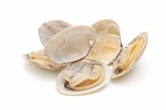 clams Стоковое Фото