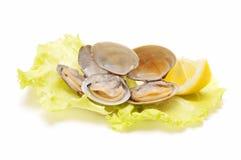 clams Стоковые Изображения RF