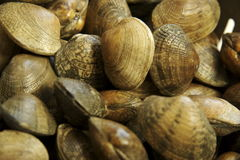 Clams. Full frame of hard shell clams Royalty Free Stock Photography
