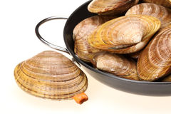 CLAMS. Blanch clams over white background stock photo
