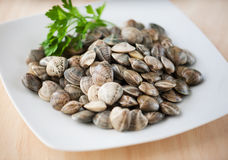 Clams. On plate with parsley Stock Photos