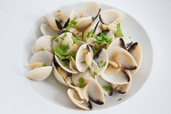 Clams Stock Photography
