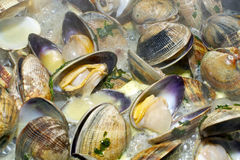 Clams Royalty Free Stock Photography