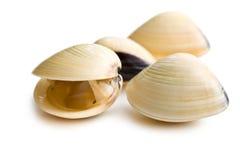 Свежие clams Стоковые Изображения