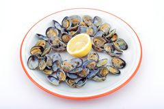 Clams. Open clams by steam with lemon stock image