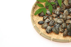 Clams on a bamboo colander Royalty Free Stock Photography