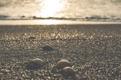 Clams on the beach Royalty Free Stock Image