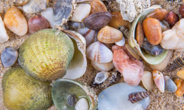 Clams On Beach Sand Background Royalty Free Stock Photo