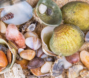 Clams On Beach Sand Background II Royalty Free Stock Image