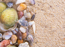 Clams On Beach Sand II Royalty Free Stock Images
