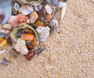 Clams On Beach Sand IV Royalty Free Stock Images