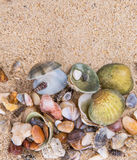 Clams On Beach Sand IX Royalty Free Stock Photography