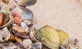 Clams On Beach Sand VI Stock Photo