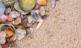 Clams On Beach Sand VII Stock Photo