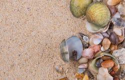 Clams On Beach Sand VIII Stock Photos