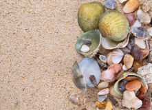 Clams On Beach Sand X Stock Photos