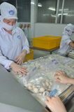 Clams are being washed and packaged in a seafood processing plant in Tien Giang, a province in the Mekong delta of Vietnam Royalty Free Stock Photos