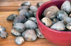 Clams in a bowl Stock Photography