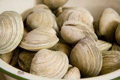 Clams in a Bowl Royalty Free Stock Image