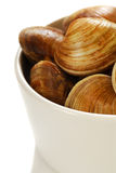 Clams in a bowl Stock Images