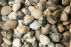 Clams box exposed in the fish shop. Background and texture Royalty Free Stock Photography