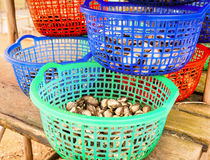 Clams in a bucket Stock Photo