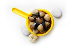 Clams - catch of the day Royalty Free Stock Image
