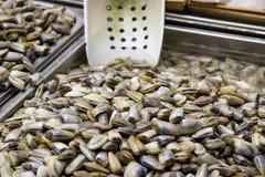 Clams - Class Bivalvia - Mollusks. Clams - Class: Bivalvia - Seafood in Fresh Food Market - Catania, Italy Stock Photography