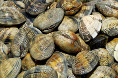 Clams Close-up Royalty Free Stock Photography