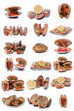 Clams collection. Stock Photo