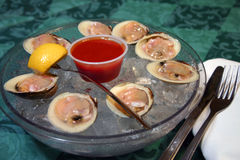 clams dish сырцовое Стоковые Изображения RF