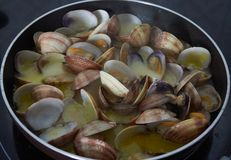 Clams very exquisite. Exquisite and very nutritive crustacean stock image