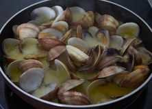 Clams deliciuous food in spain. Exquisite and very nutritive crustacean royalty free stock photography